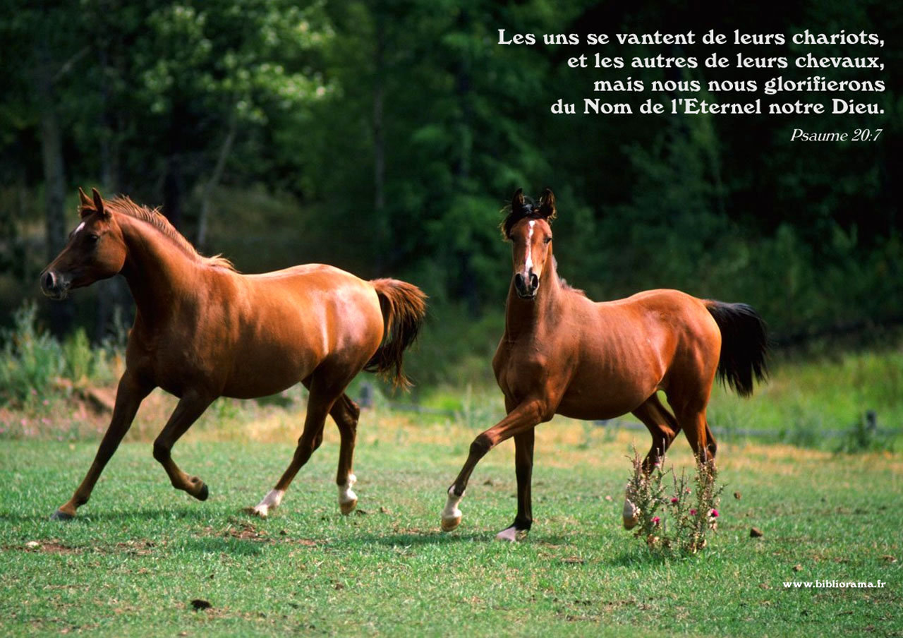 Quotes About Amazing Horses 30 Quotes