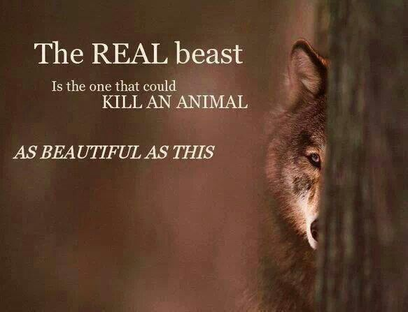 Quotes About Killing Animals 44 Quotes