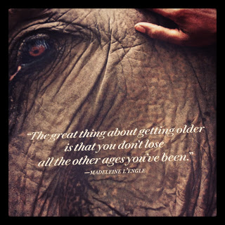 Quotes about Elephants (182 quotes)