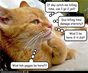 Quotes About Orange Cats 11 Quotes