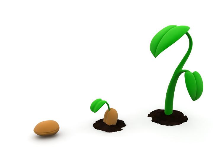 удерживает абсолютное картинка семечко росток побег бутон цветок этом году