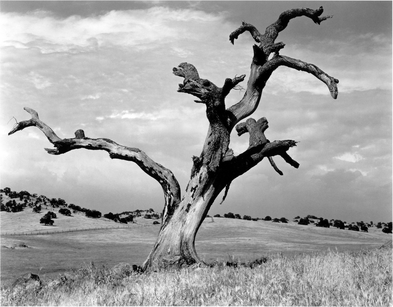 черно белые картинки природа вдохновение