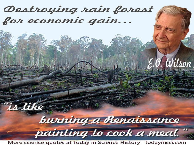 quotes about rainforest quotes