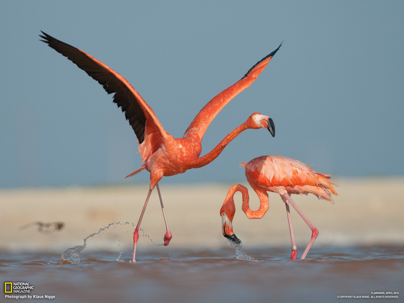 Quotes about Flamingos 41 quotes
