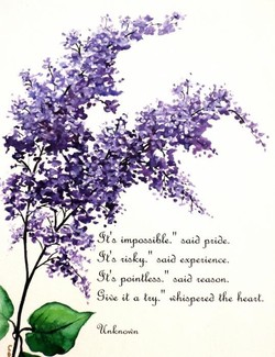 lilac quot is